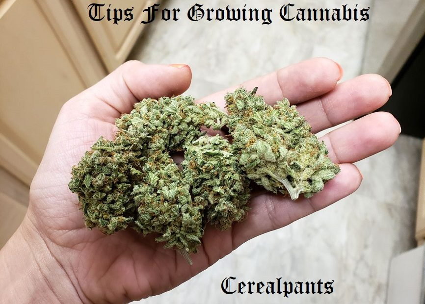 Tips For Growing Cannabis