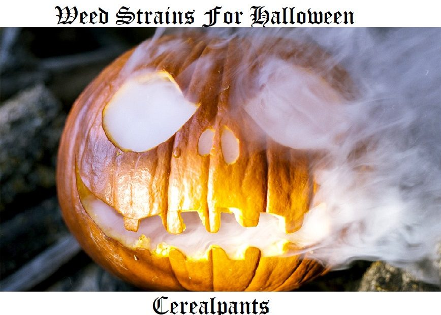 Weed Strains For Halloween