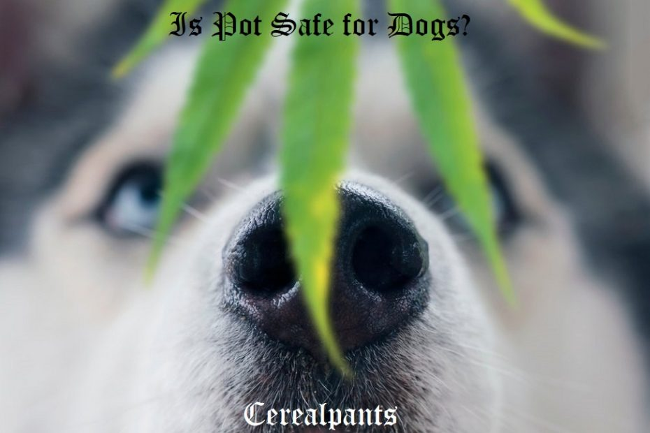 Is Pot Safe for Dogs