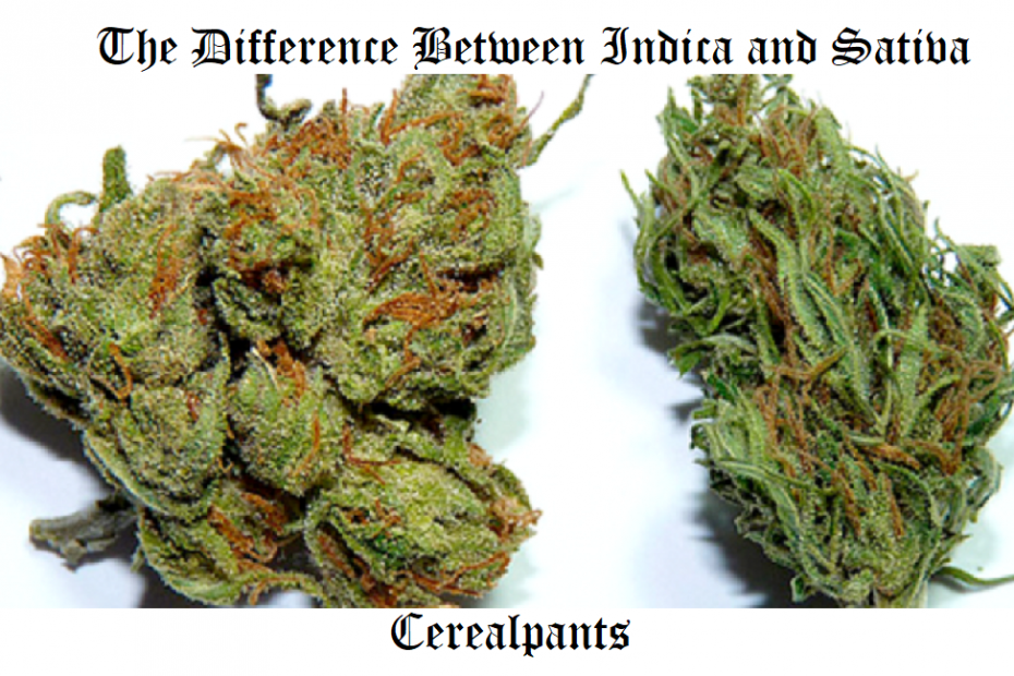 The Difference Between Indica and Sativa