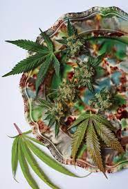 Cooking with Cannabis Pot Leaves